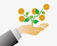 Money tree from your hand. Money tree from your business hand Royalty Free Stock Photos
