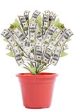 Money Tree2 Royalty Free Stock Photo