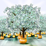 Money trees. An orchard of money trees growing from golden pots. Concept for money gains and growth