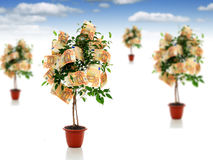 Money trees. Royalty Free Stock Photography