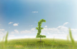 Money trees. Financial growth and success on a green summer natural green grass landscape with a single trees in the shape of a money sign showing a business Royalty Free Stock Photography