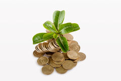 Money under trees or plant Royalty Free Stock Image