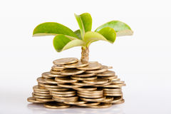 Money under trees or plant Royalty Free Stock Photography