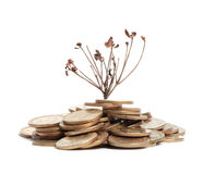 Money with withered branch. Isolated on white royalty free stock photo