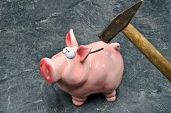 猪moneybox 免版税图库摄影