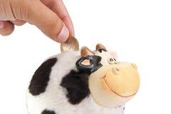 Moneybox de la vaca Imágenes de archivo libres de regalías