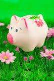 Moneybox guarro en hierba Foto de archivo libre de regalías