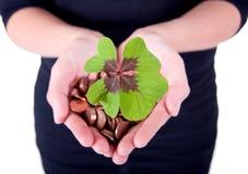 Moneytree groeit Royalty-vrije Stock Afbeelding