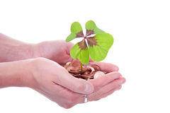 Moneytree grows in hands Royalty Free Stock Image