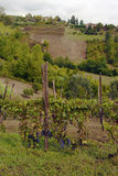 monferrato ландшафта Стоковое фото RF
