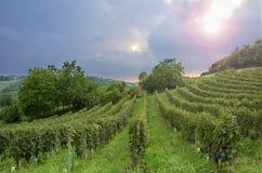 Monferrato :巴芭拉葡萄园背后照明 颜色女儿图象母亲二 图库摄影