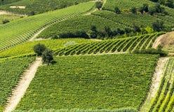 Monferrato (Italie) Photos libres de droits