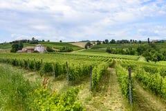 Monferrato (Italy) Stock Image