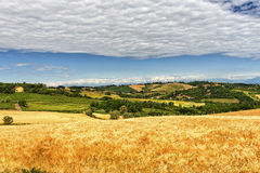 Monferrato (Itália): paisagem Imagens de Stock Royalty Free