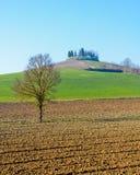 Monferrato landskap Höst i Piedmont, Italien Royaltyfri Foto