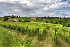 Monferrato (Włochy): krajobraz Zdjęcia Royalty Free