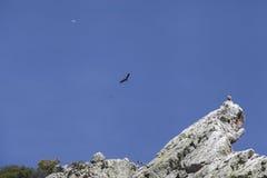 Monfragü e Nationaal Park Royalty-vrije Stock Afbeeldingen