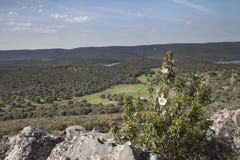 Monfragü e Nationaal Park Royalty-vrije Stock Afbeelding