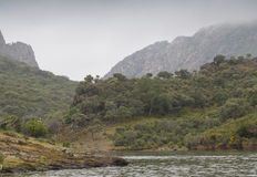 Monfragü e Nationaal Park, Ciconia-nigra Stock Afbeelding