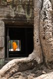 Monge, árvore gigante e raizes no baile de finalistas Angkor Wat do templo Ta Fotos de Stock Royalty Free