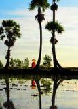 Monge & palmeiras Imagens de Stock