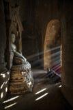 Monge pequena de Myanmar Fotos de Stock