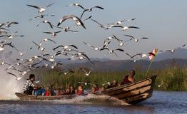 Monges e gaivota Fotos de Stock