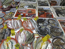 Mongkok wet market fishes Stock Photos