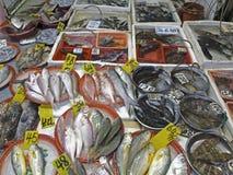 Mongkok wet market fishes Stock Photos