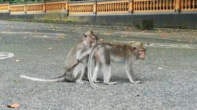Mongky和朋友 库存图片
