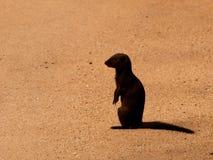 Mongoes Stock Afbeeldingen