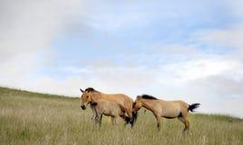 Mongolei Stockfotografie