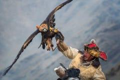 Mongolei, goldener Eagle Festival Hunter On Horse With ein ausgezeichneter Steinadler, seine Flügel verbreitend und halten sein O stockfotos