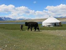 Mongolei-Schafe - traditioneller Lebensstil und Landschaft in West-Mongolei Stockfotos