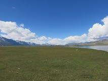 Mongolei-Schafe - traditioneller Lebensstil und Landschaft in West-Mongolei Stockbilder