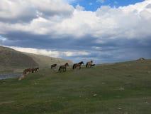 Mongolei-Schafe - traditioneller Lebensstil und Landschaft in West-Mongolei Lizenzfreies Stockfoto