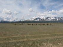 Mongolei - traditioneller Lebensstil und Landschaft in West-Mongolei Lizenzfreie Stockfotografie