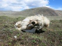 Mongolei - traditioneller Lebensstil und Landschaft in West-Mongolei Stockfoto