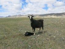 Mongolei - traditioneller Lebensstil und Landschaft in West-Mongolei Stockbilder