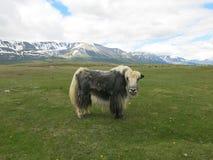 Mongolei - traditioneller Lebensstil und Landschaft in West-Mongolei Stockbild