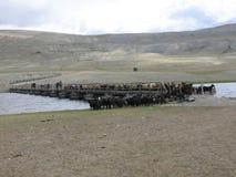 Mongolei - traditioneller Lebensstil und Landschaft in West-Mongolei Lizenzfreies Stockbild