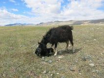 Mongolei - traditioneller Lebensstil und Landschaft in West-Mongolei Stockfotos