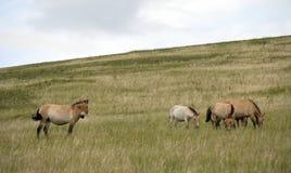 Mongolië royalty-vrije stock foto's