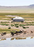 Mongolia Stock Photography