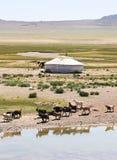 mongolia Fotografia Stock