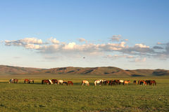 Mongolia Royalty Free Stock Photo