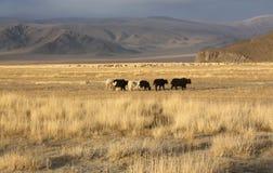 Mongolia Royalty Free Stock Photos