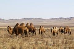 Free Mongolia Stock Images - 24502394