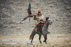 Mongolia, Eagle Festival de oro Hunter On Gray Horse With Eagle de oro magnífico, separando sus alas y sosteniendo su presa imagen de archivo libre de regalías
