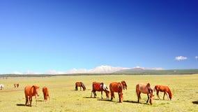 Mongolia, grupa Mongolski horseson stepowa droga w pogórzach Sayan góry Fotografia Royalty Free